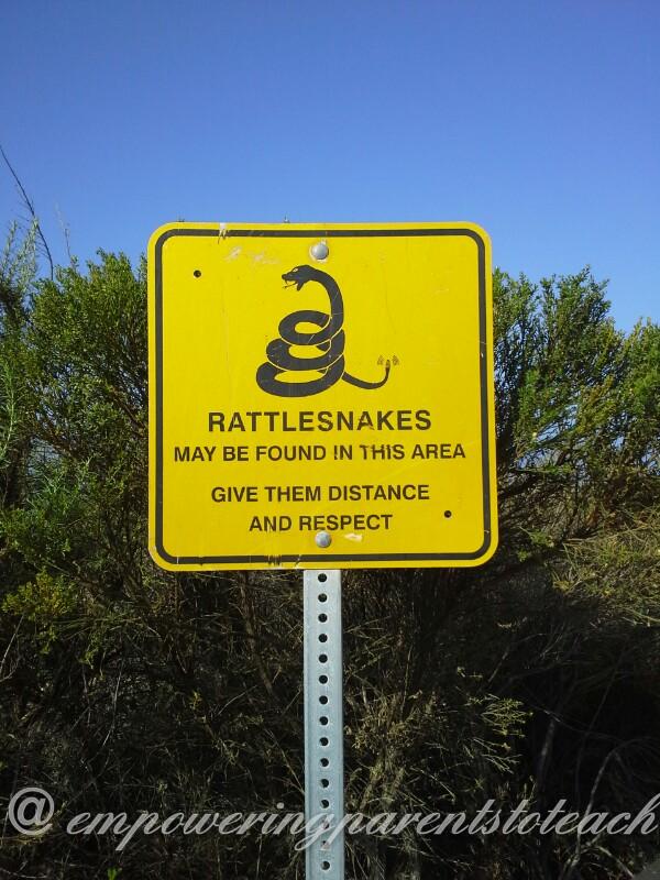rattlesnake environment
