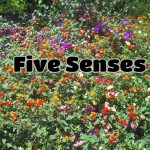 Empowering Parents to Teach- Five Senses